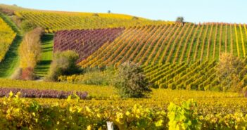 Weingut Saaler, Saulheim: Winzer an der Spitze