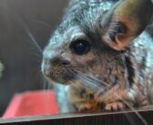 Die Maus im Vogelhaus