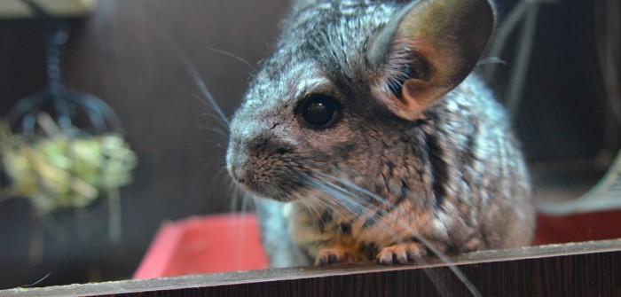 """Die Maus im Vogelhaus: Meine Erlebnisse mit """"Felix"""" und """"Artur"""" am frühen Morgen oder was einem blühen kann, wenn man zu früh in die Redaktion kommt."""